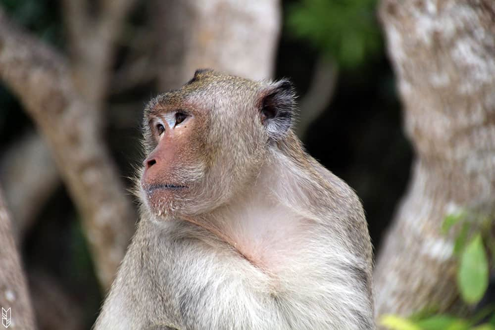 Monkey Island - Vietnam