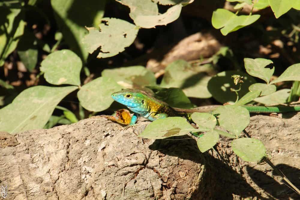 dans la forêt du Parc Tayrona