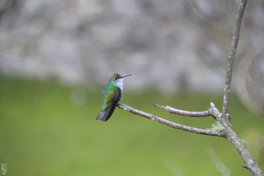 rencontre avec un colibri