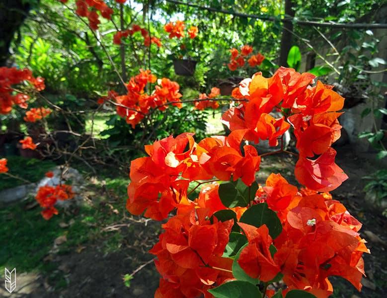 les jardins colorés du Venezuela