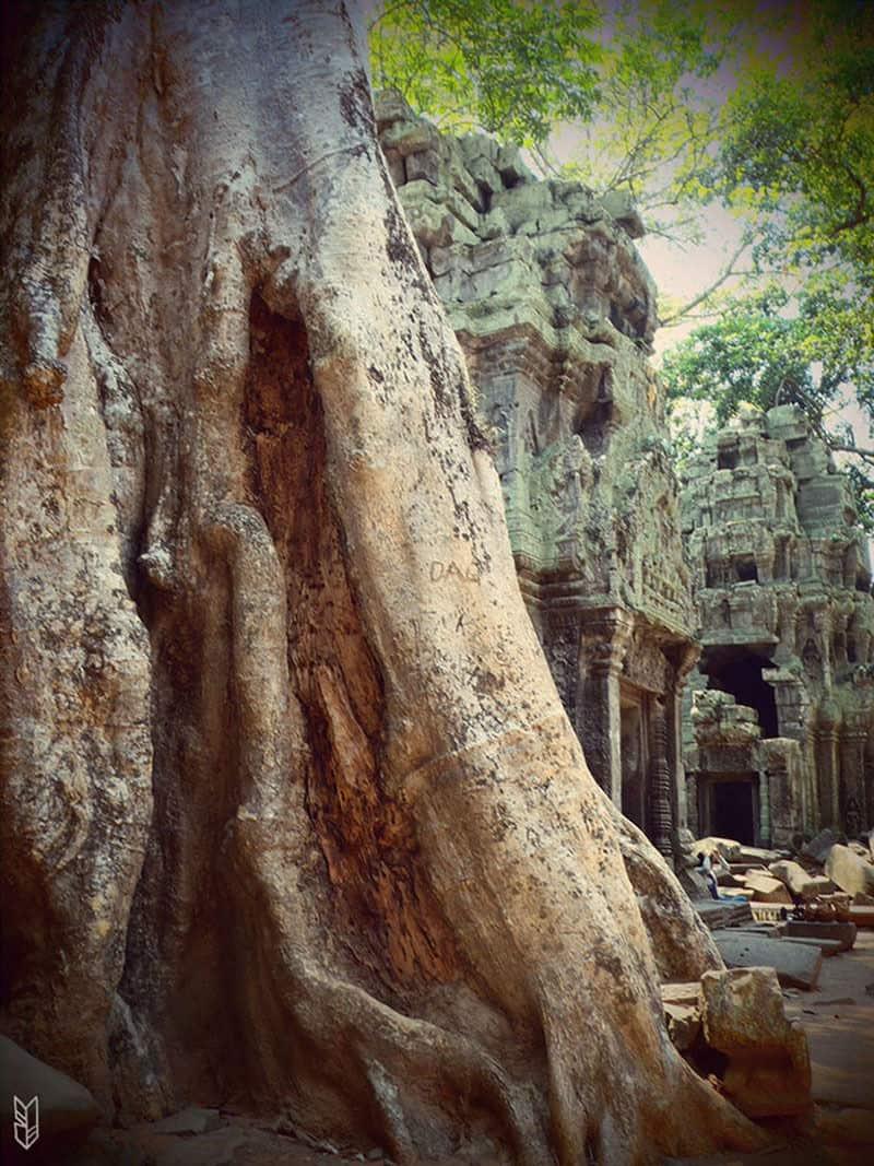 Ta Prohm - Temples d'Angkor