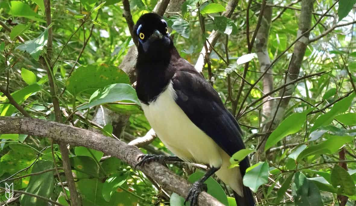 une belle rencontre dans la forêt d'Iguazu en Argentine