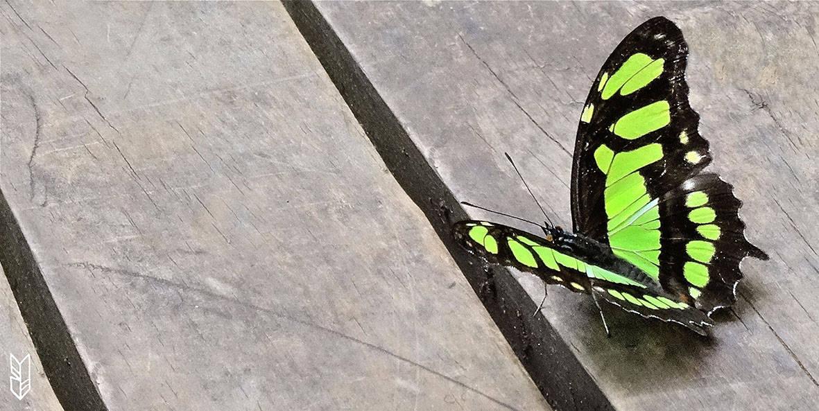 papillon coloré d'Iguazu - Argentine