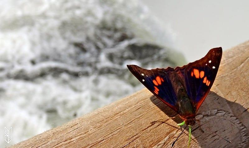 des papillons par milleirs