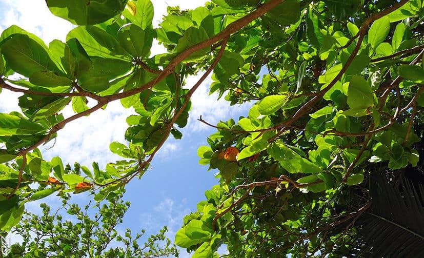 des vacances à l'ombre des arbres - Brésil