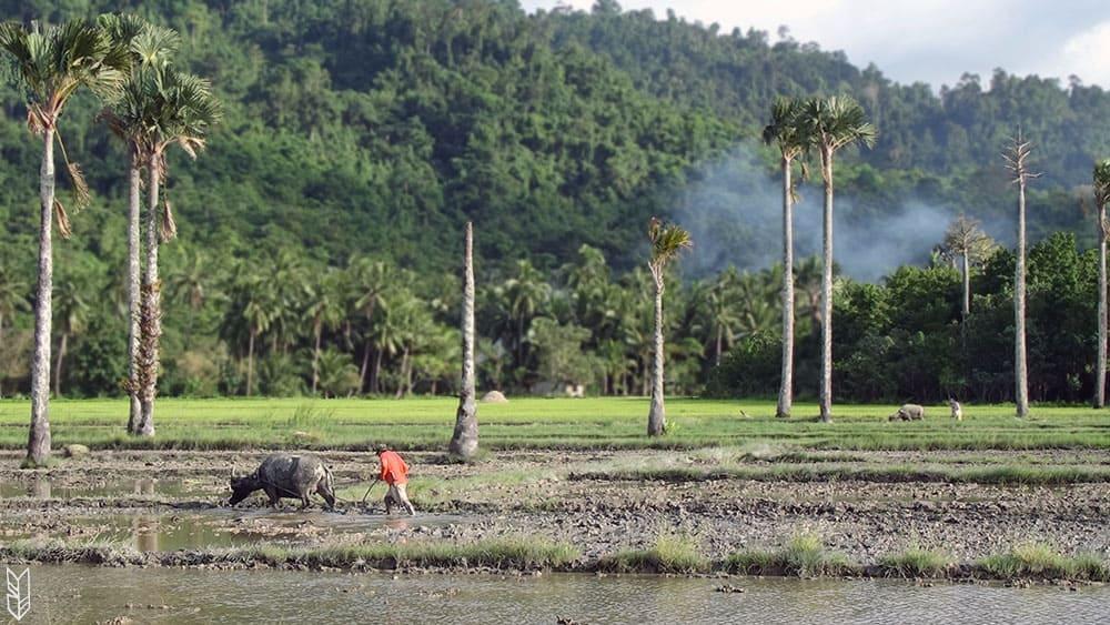paysages philippins - Palawan