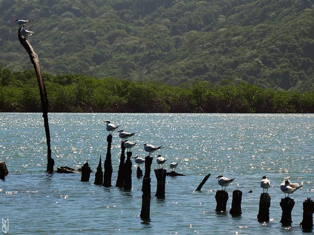 le parc de Morrocoy au Venezuela