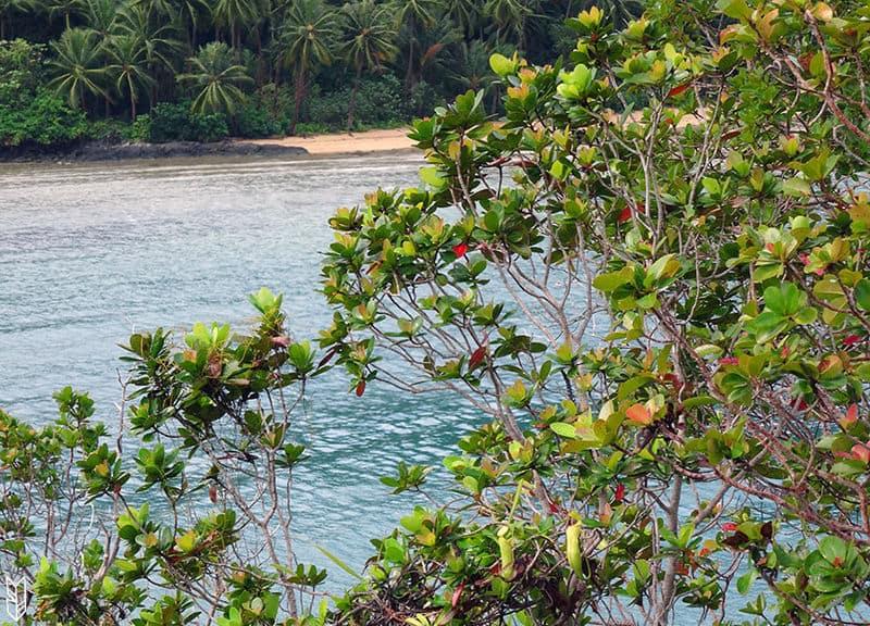 Snake Island et ses plantes carnivores à Palawan