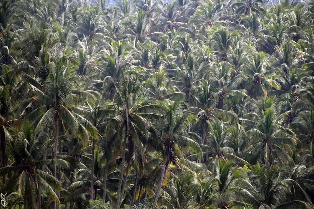 les palmiers d'Ubud à Bali