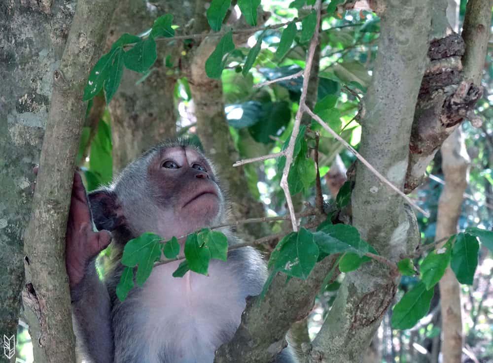 voir des singes à Bali