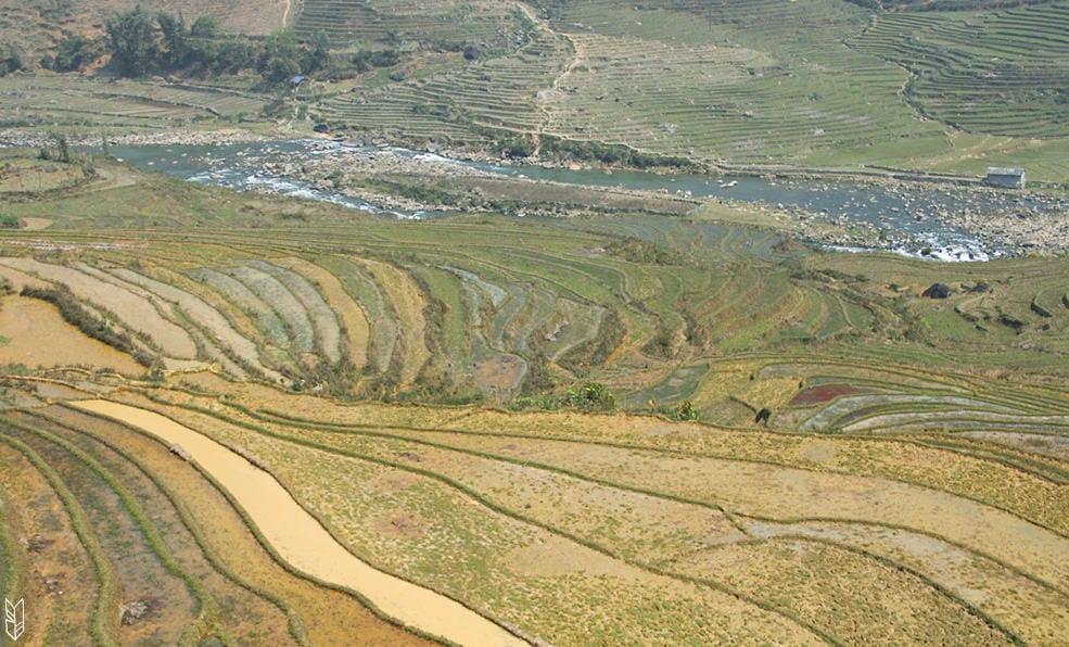 trekking dans les rizières de Sapa