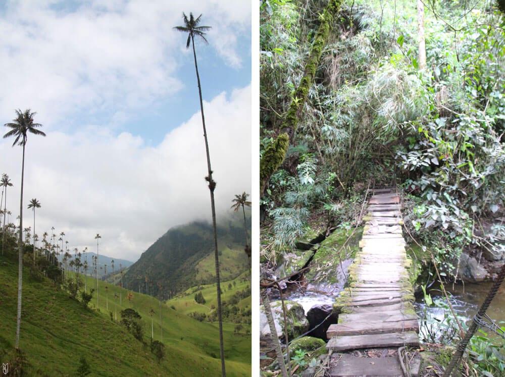 randonnée dans la vallée de Cocora - Salento