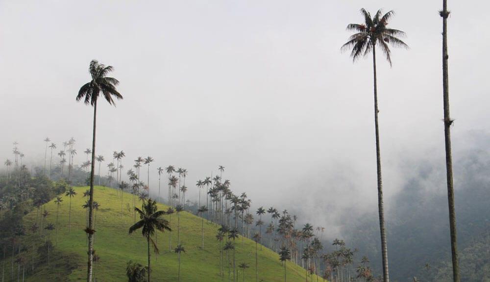l'incroyable vallée de Cocora