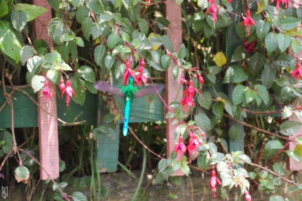 prendre le temps de regarder les colibris en Colombie