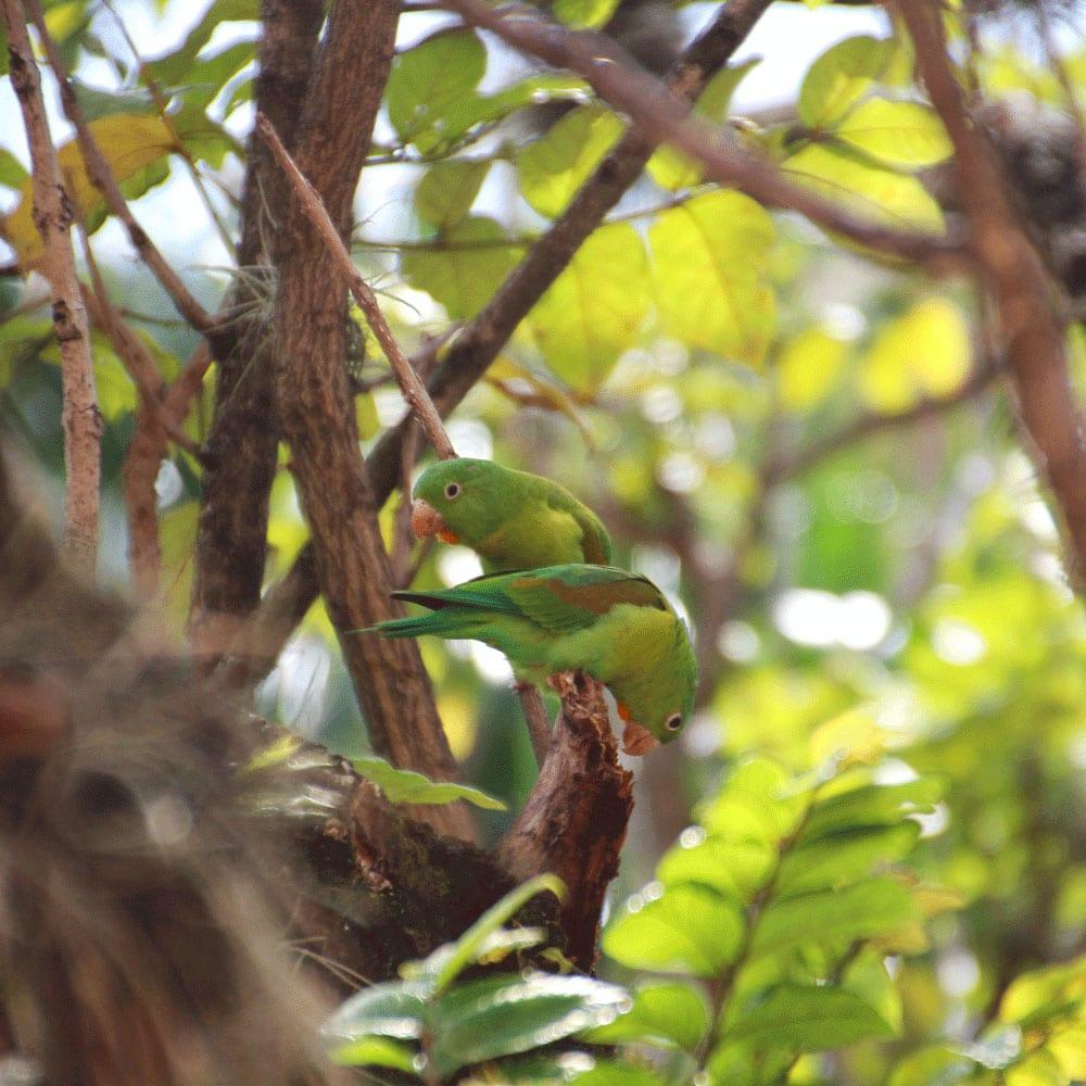 mes voisins les perroquets