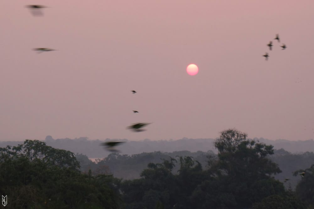 voir le coucher de soleil et les centaines de perroquets à Leticia
