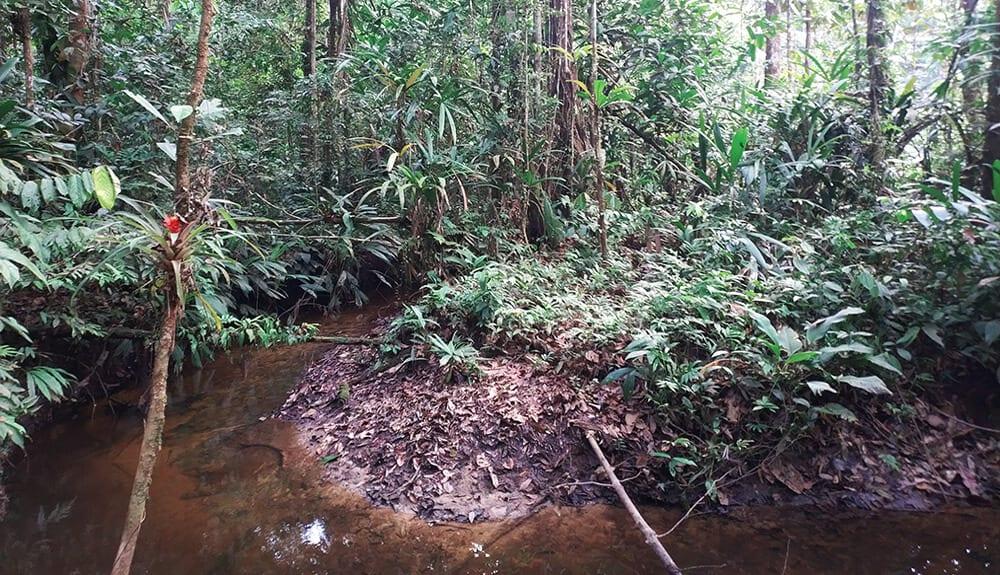 Trekking en Amazonie - dormir dans la jungle