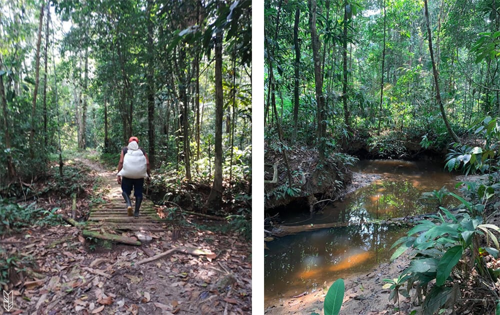 trekking en Amazonie