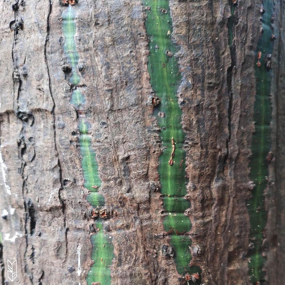 tomber amoureuse des différentes variétés d'arbres