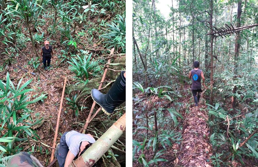 jouer à cache-cache en forêt amazonienne
