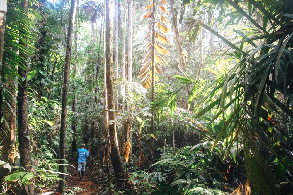 randonnée dans la jungle du Chocó