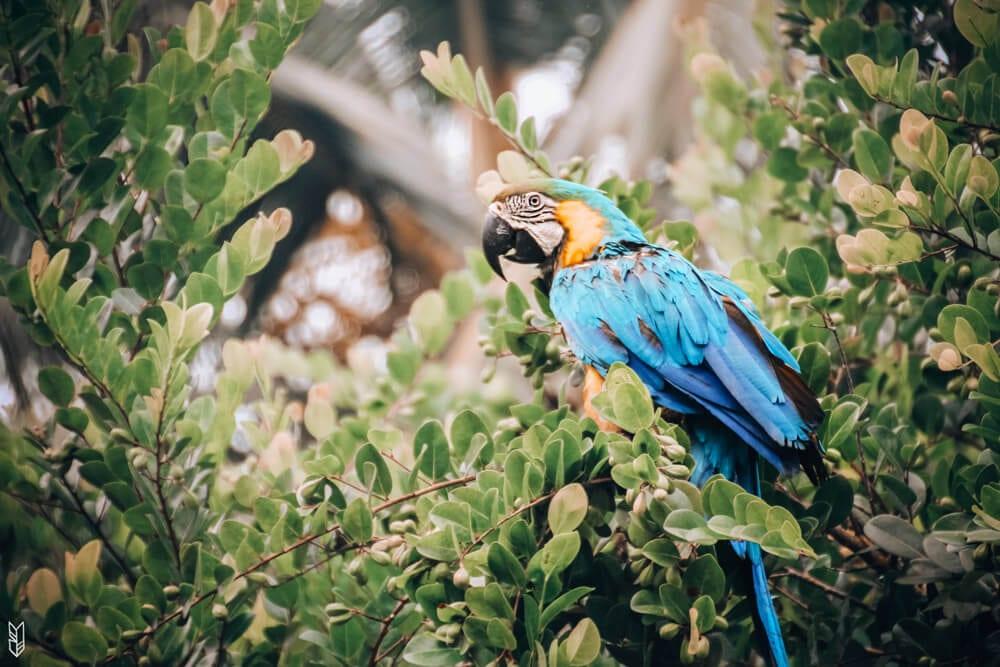 Voir des animaux à Bahia Solano