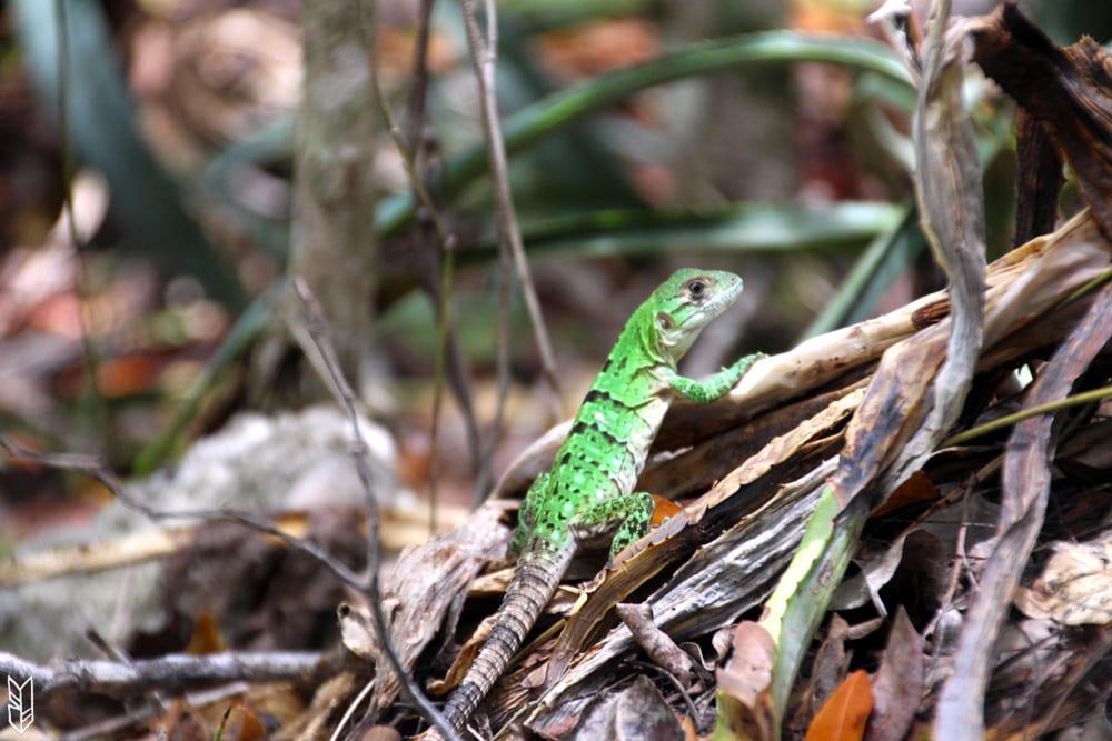 en allant aux Cenotes de Tulum
